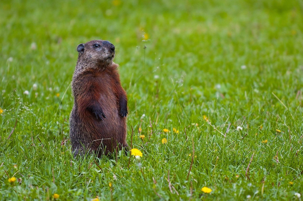 groundhog activities for toddlers