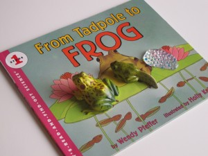Frog Lifecycle Montessori