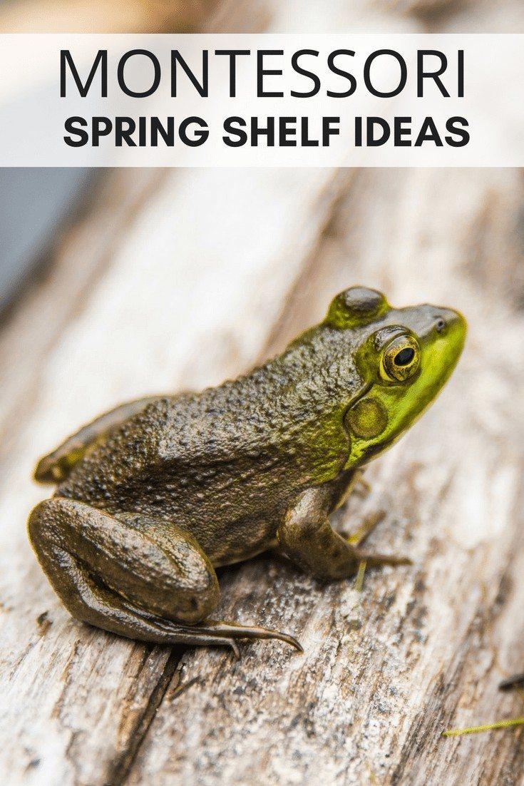 Montessori Spring Shelf Ideas