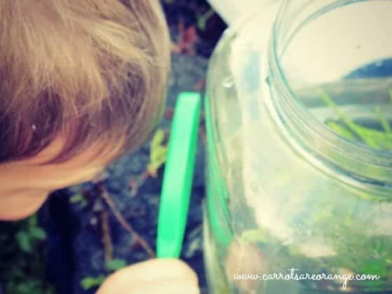 Life Cycle of a Frog Activities for Preschoolers
