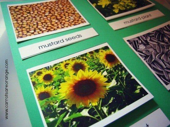 preschool botany