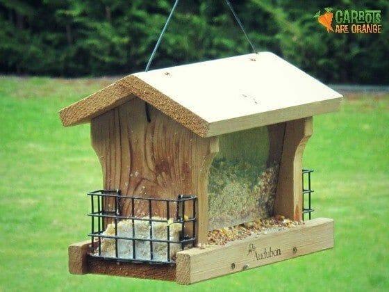 bird_feeding_kids