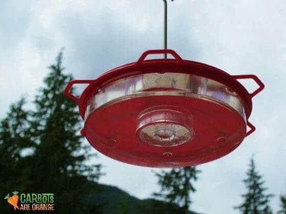 hummingbird_feeder
