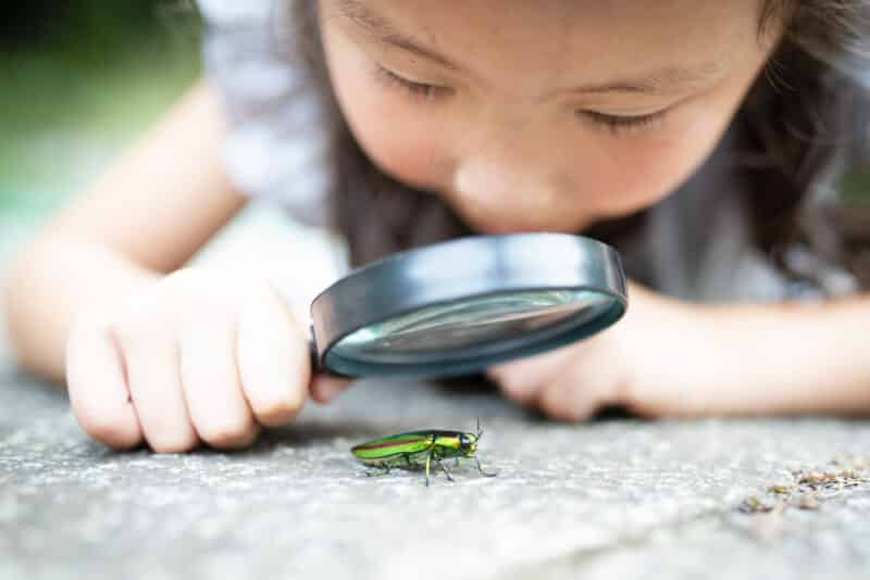 Girl is watch a jewel beetle in the magnifying glass stock photo
