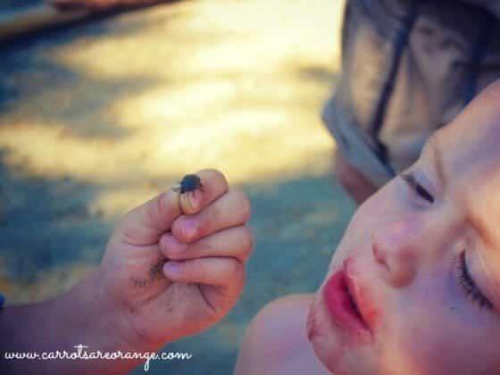 Bug_Up_Close