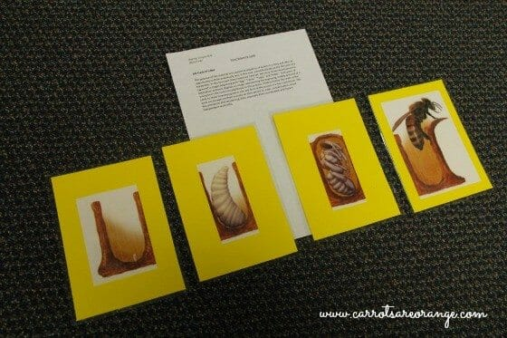 Honeybee Story Sequence Cards