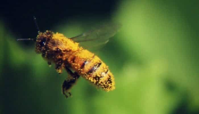 parts of the honey bee close up