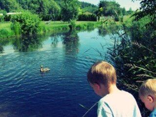 observation pond