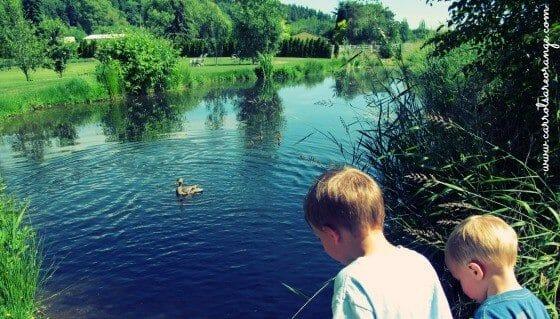 Observation_Pond_560