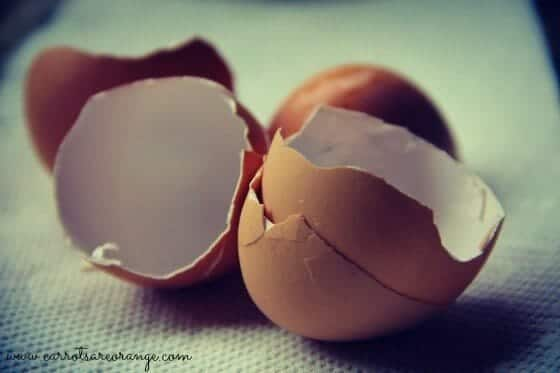 egg_shell_close_up_feature