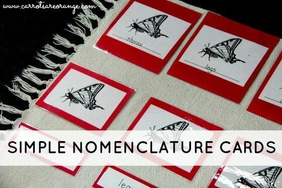 simple nomenclature cards