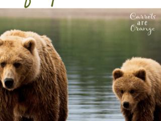 Super Fun Easy Bear Activities for Preschoolers
