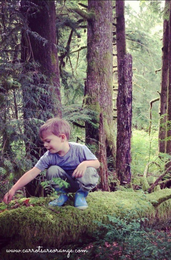 Forest Kindergarten Pinterest