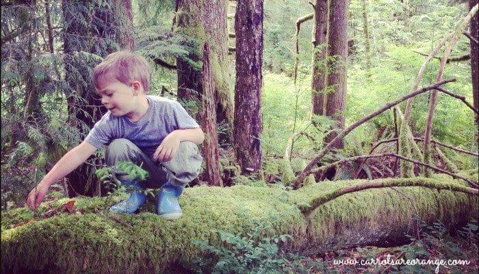 A little boy exploring a rainforeast
