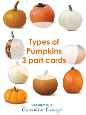 Types of Pumpkins - 3 Part Cards
