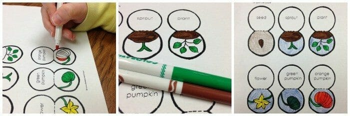 Lifecycle of a Pumpkin Craft - Printable