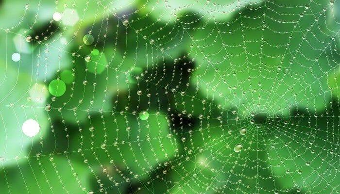 spider web droplet