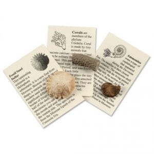 Fossil Collection for Kids