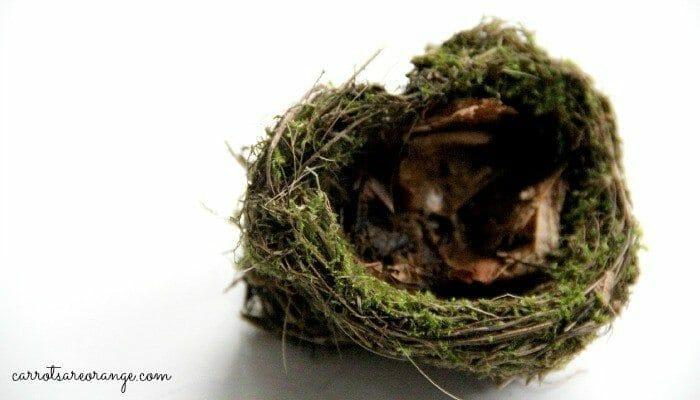 hummingbird nest feature