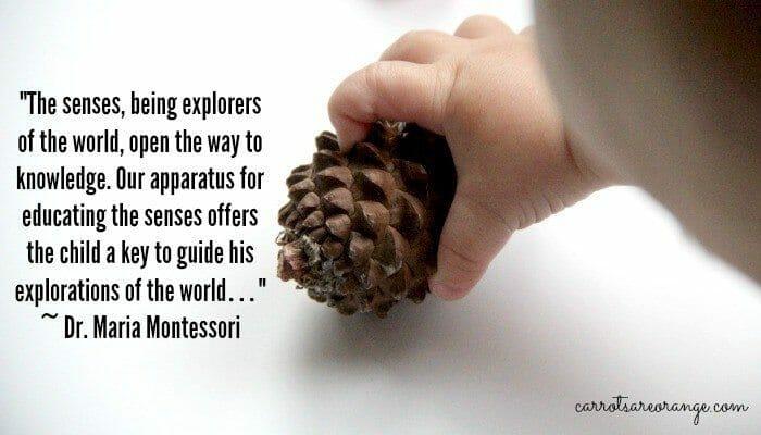 Montessori Senses Quote