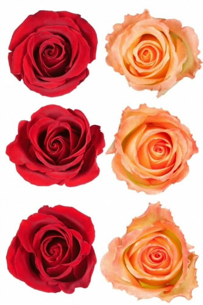 How to make a paper rose - rose crafts 101