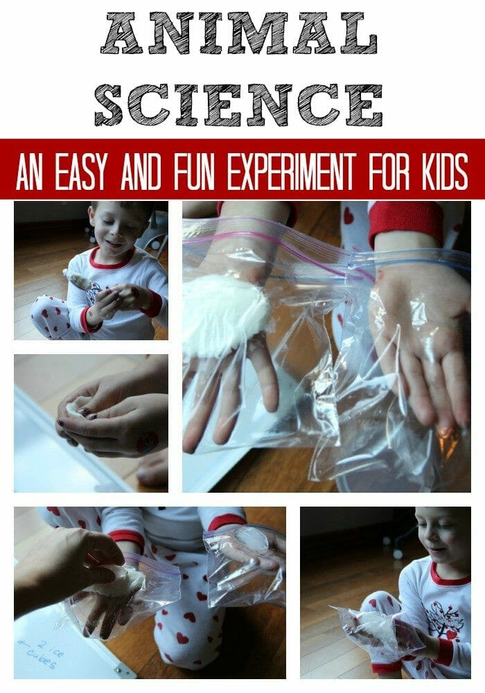 Arctic Animal Science Experiment for Kids