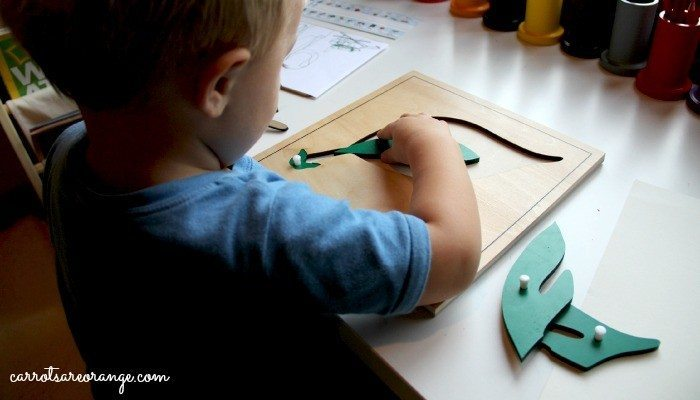 Child Working with Botany Puzzle