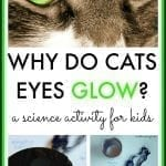 Why Do Cats Eyes Glow Collage