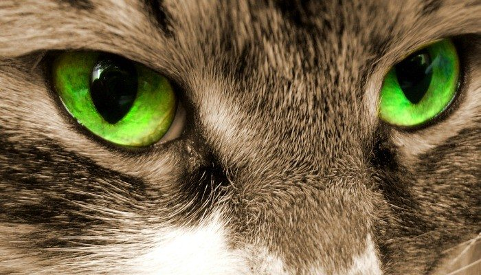Why do cat's eyes glow in the dark activity