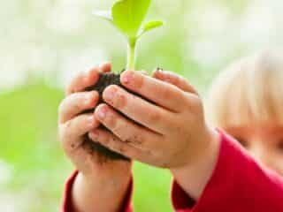 Rock Star Botany Activities for Kids
