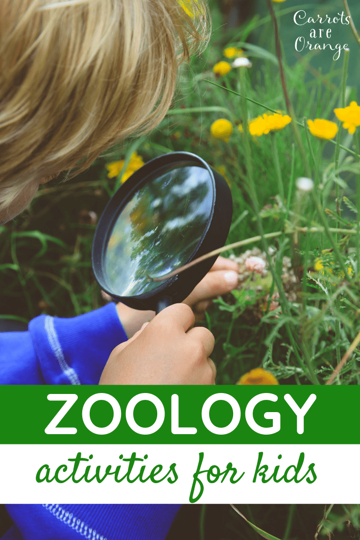 12 Super Fun & Absolutely Easy Zoology Activities for Kids