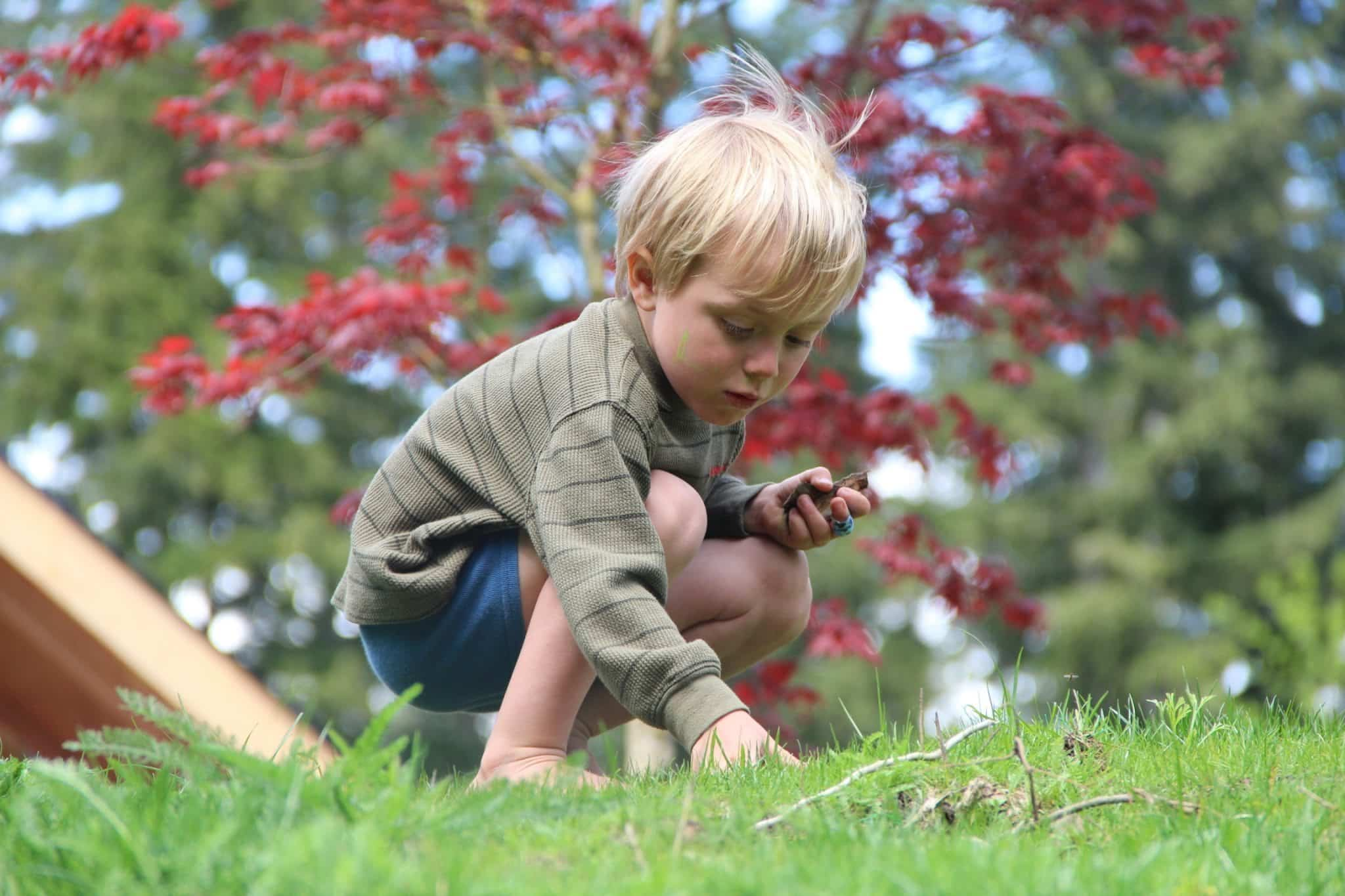 children in nature collecting