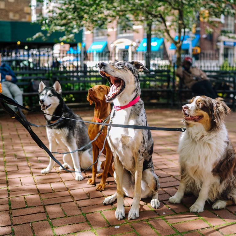 Ways for Kids to Make Money - Dog Walker