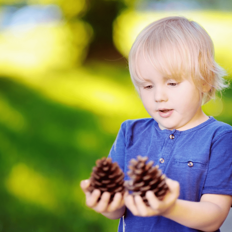 A child looking at pinecones