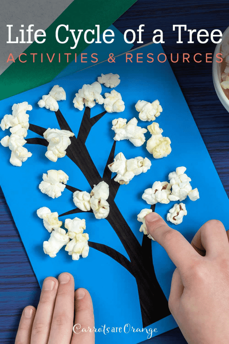 Life Cycle of a Tree Activities and Resources
