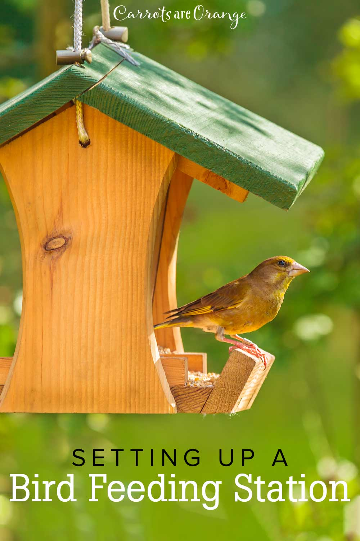 Setting Up A Bird Feeding Station